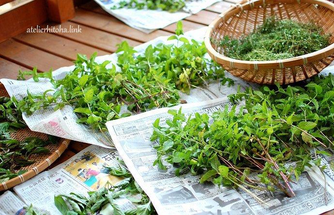 春から楽しむハーブのある暮らし/LIS @ Food&Lifestyle Store LIS