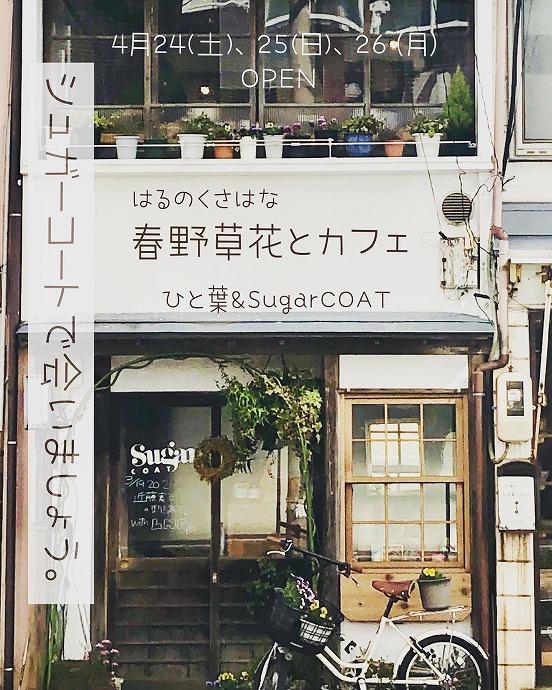 春野草花(はるのくさはな)とカフェ @ SugarCOAT
